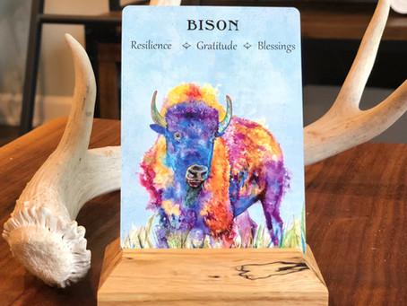 Bison Spirit Animal