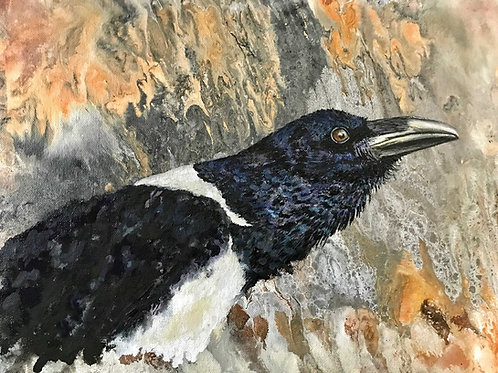 Pied Crow on Canvas