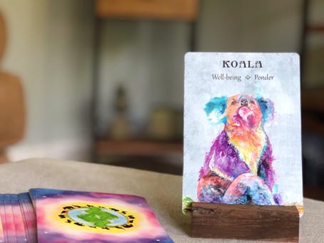 Koala Spirit Animal