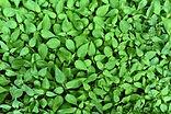 plant-3463612.jpg