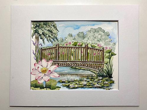 8x10 Kenilworth Aquatic Gardens Watercolor