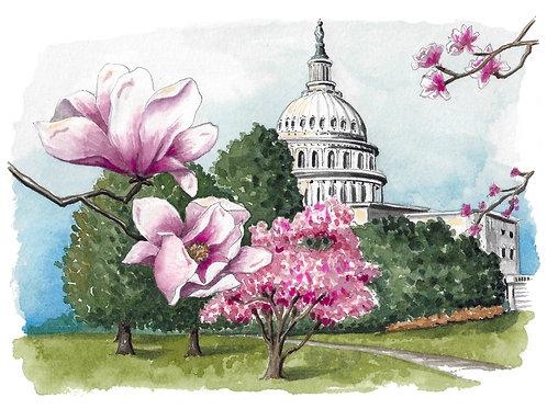 Framed 5x7 Capitol Magnolias Original Watercolor