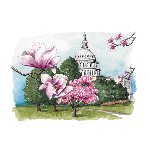 DC Capitol Hill Magnolias Giclee Print or Greeting Card