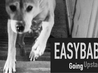 2016 Release: Going Upstairs with EasyBaby