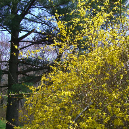 Yellow Spring