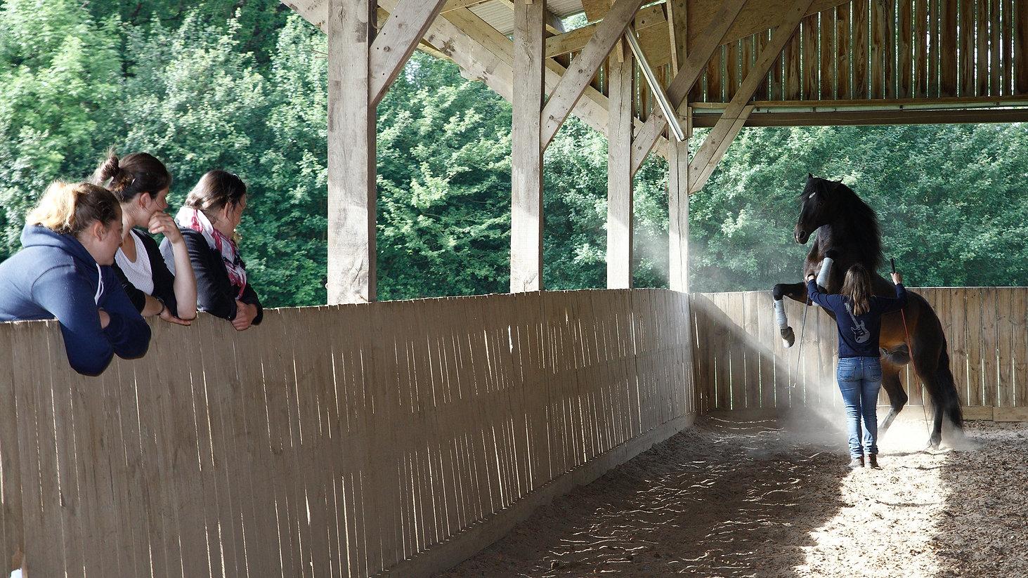 Cavalière pratiquant l'équicoaching avec un cheval