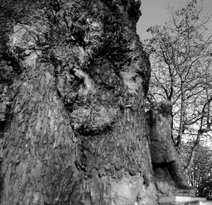 Churchill Tree