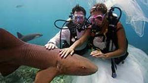 underwater-weddings-florida-keys.jpg