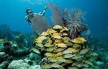 reef trips.jpg