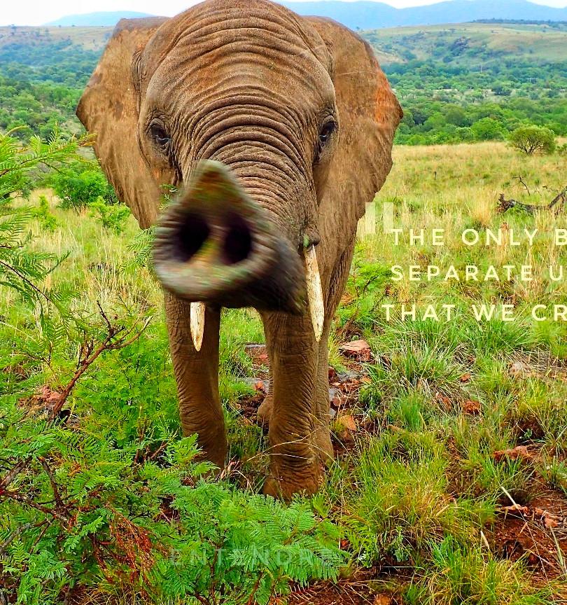 Johannesburg Safari, S.A.