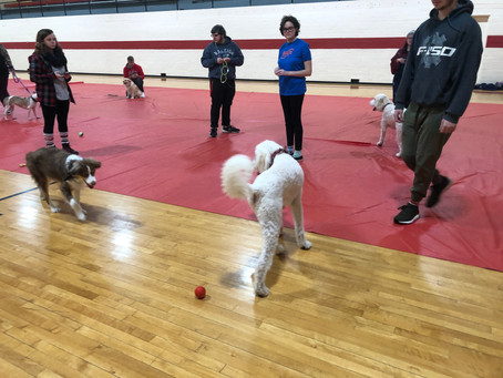 Puppy Play Date Helps Students De-Stress