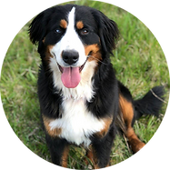 F-Bernese-Jewel-Circle.png
