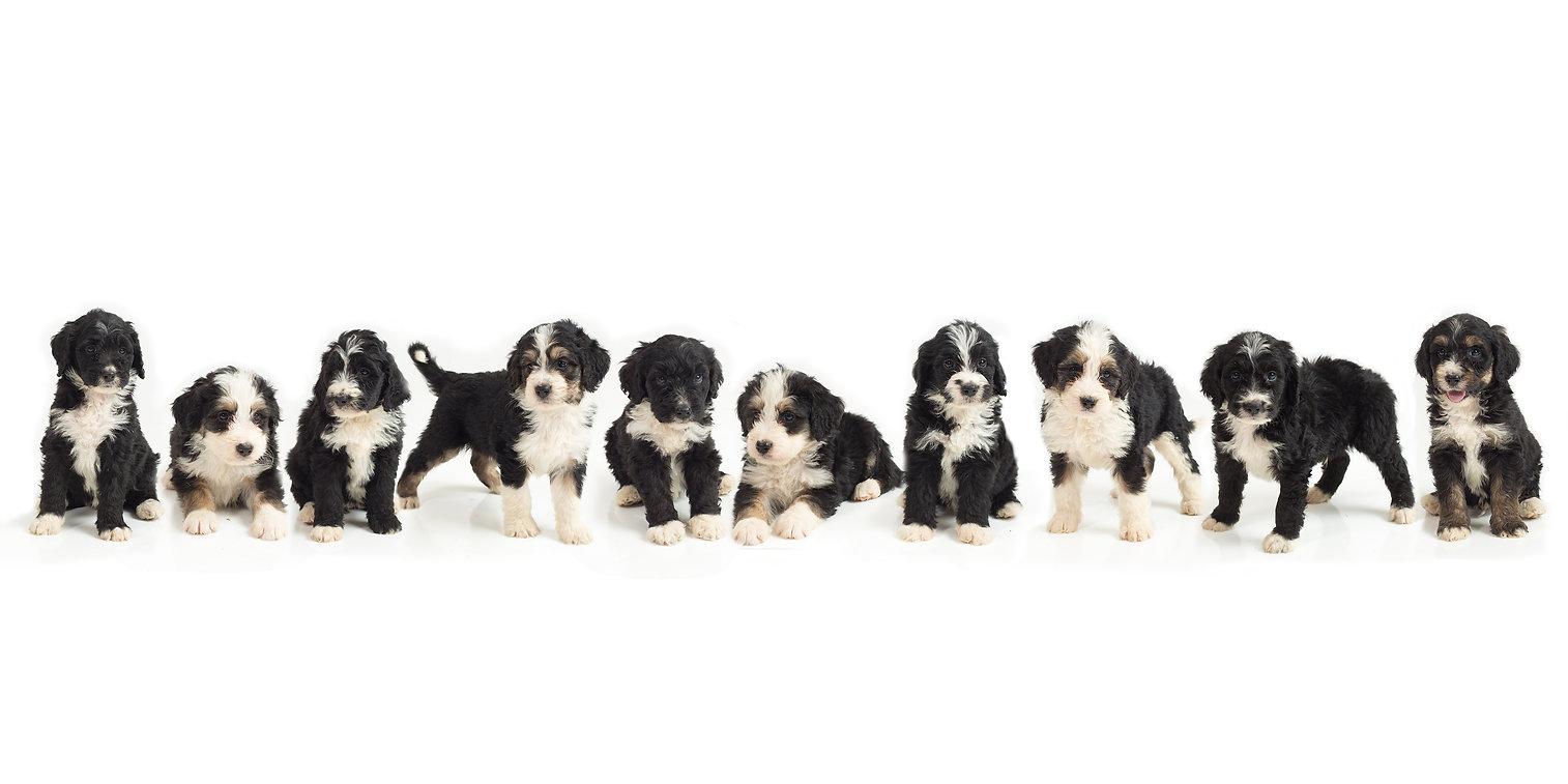puppy group 2.jpg