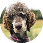 F-Poodle-Bliss-Circle.png