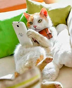 cat-on-phone.jpg