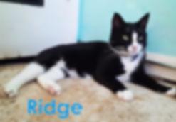 Ridge a.jpg