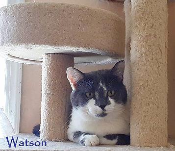 Watson under climber use a.jpg