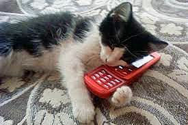 Cat on red cell a.jpg