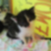 Stripe baby.jpg