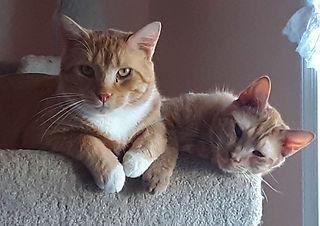 Bonzo and Fisher sleeping.jpg