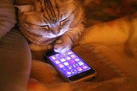 cat on cell phone a.jpg