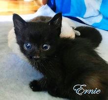 Ernie big eyes a USE.jpg
