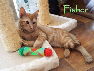 Fisher with toy a.jpg