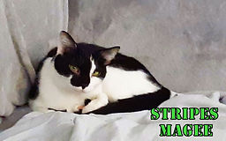 Stripes Magee on sofa March a.jpg