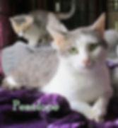 Penelope's family portrait 1 zz.jpg