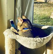 Cat on phone climber a.jpg