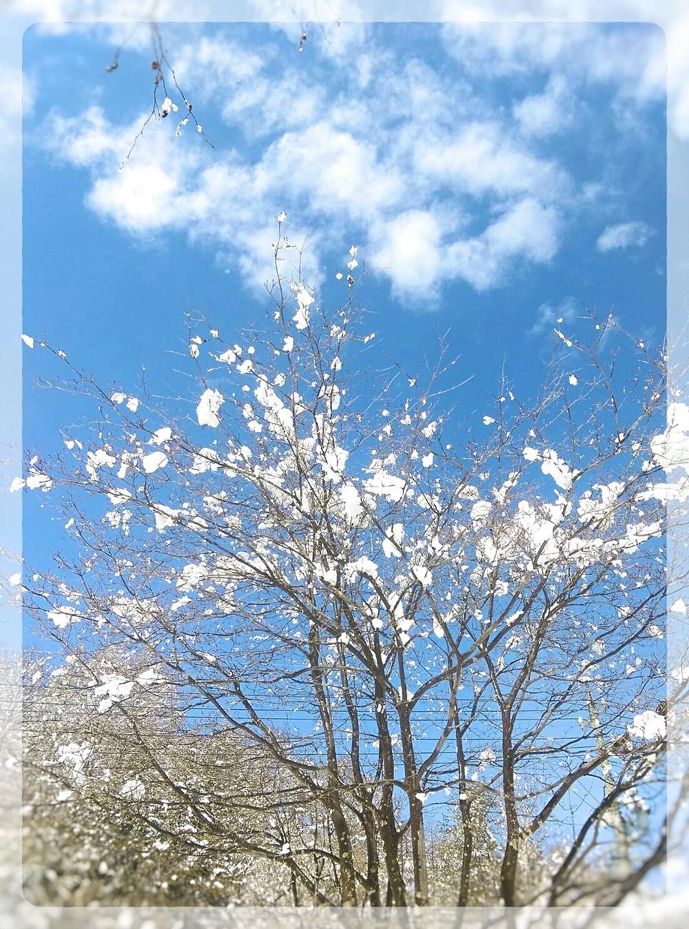 雪のお花見