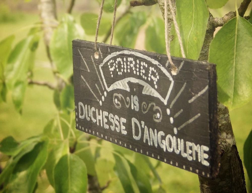 Etiquettes arbres et potager DIY