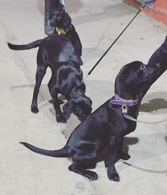 All black doggies together 😛.jpg