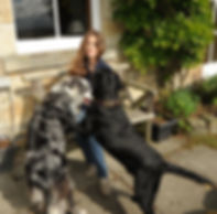dogs jump seat.jpg