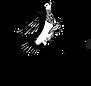 Copy of tipsybird_logo_b.png