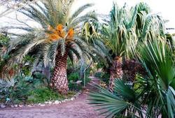 Palm-Garden--element69