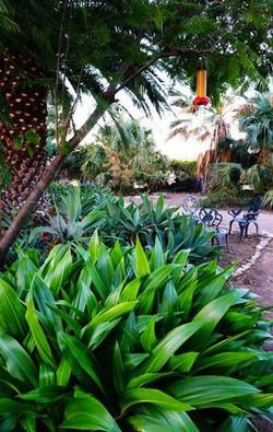 Palm-Garden--element65