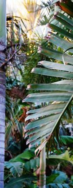 Palm-Garden--element71