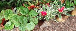 Conservatory--element68