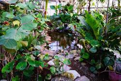 Conservatory--element57