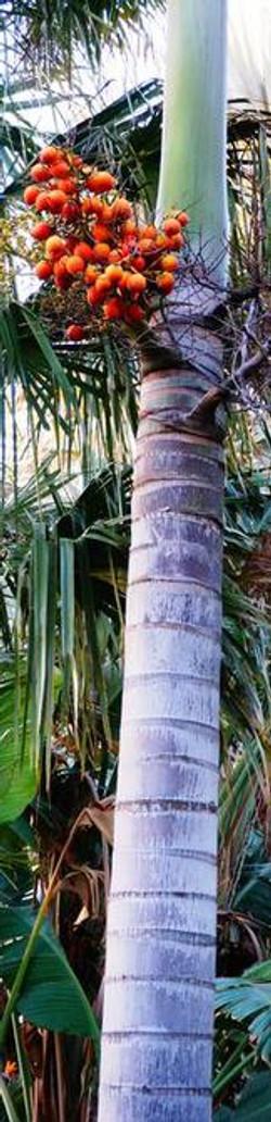 Palm-Garden--element75