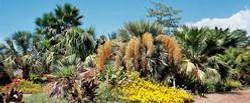 Palm-Garden--element76