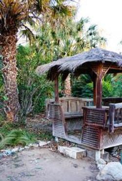 Palm-Garden--element73