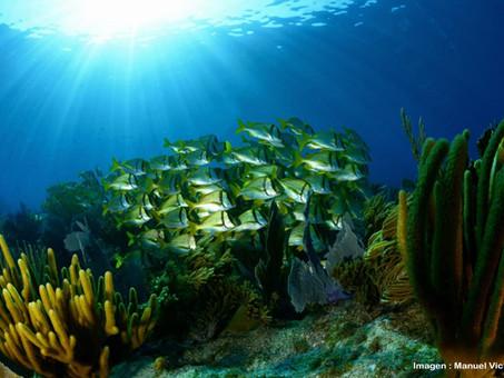 Académica de la Facultad de Ciencias Biológicas colabora en el proyecto del Corredor Arrecifal