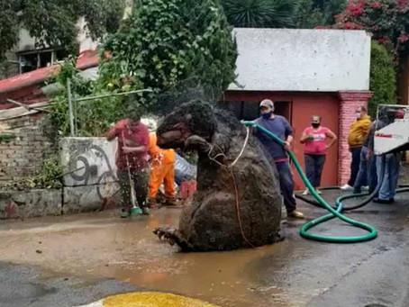 Una rata gigante y basura provocaron la muerte de Doña Mary, tras inundarse su casa por la lluvia
