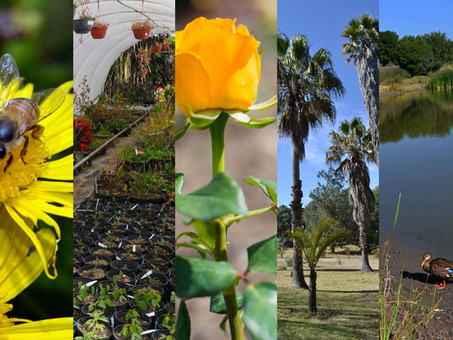 BUAP conmemora el Día Nacional de los Jardines Botánicos