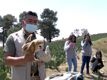 En seis años de trabajo, Uma Konkon de la BUAP reintegra a su hábitat a casi 50 aves