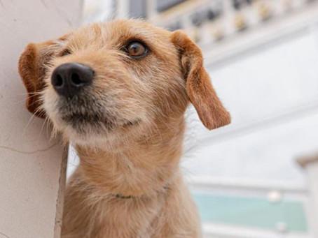 'Votito', el perro rescatado por personal del Instituto Electoral de Puebla