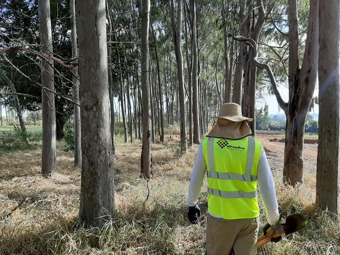 Monte Alto promove pesquisa arqueológica na área do cemitério de Ibiritama