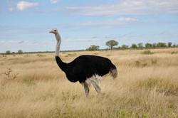 Etoscha Nationalpark